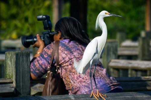 gatorland-egret-camera_1576-64.jpg