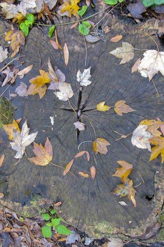 leaves_0750z.jpg