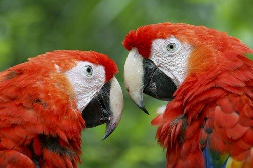 macaws_1020.jpg