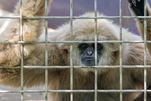monkey-face_5884-64.jpg