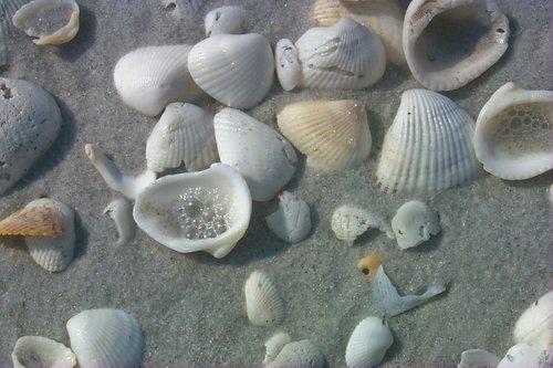shells005-6X4X300.jpg