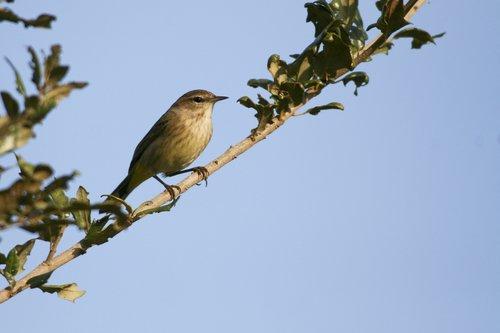 sparrow_1048-6x4.jpg