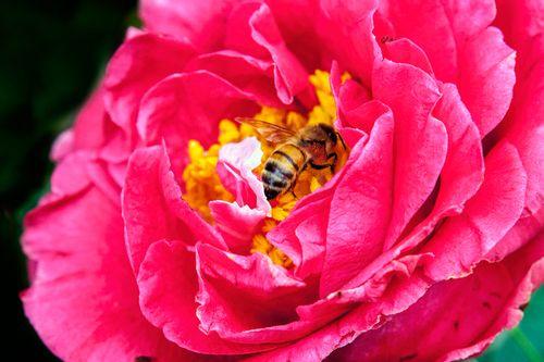 bee-flower_1230-64.jpg