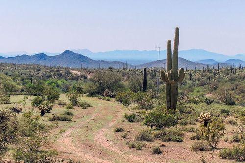 desert-saguaro_0910-64.jpg