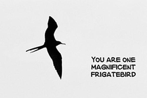frigate_birdYOUR_7393bw-641.jpg