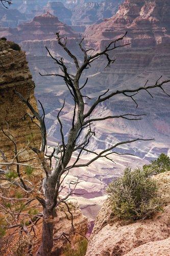 grand-canyon_3990-46.jpg