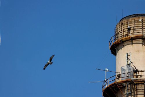 osprey_tower_0209-6x4.jpg