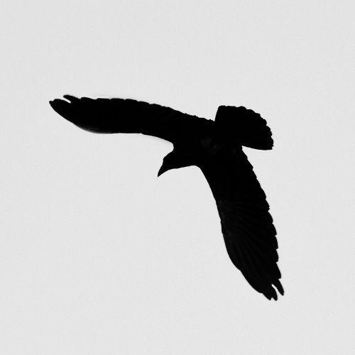 raven_5226bw-44.jpg