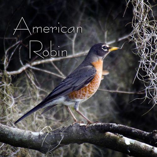 robin_2608-44txt.jpg