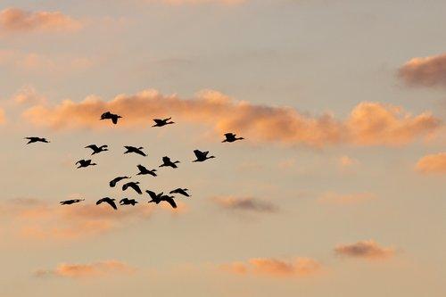 whistling_duck_4775-641.jpg
