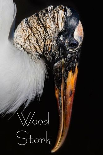a-woodstork_02141txt-46.jpg