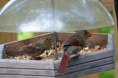 cardinal_10064-64.jpg