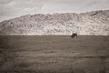 bison-HDR_4079tp-64(1).jpg
