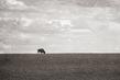 bison-HDR_4088tp-64(1).jpg