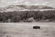 bison_3995-64(1).jpg