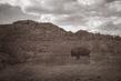 bison_4040tp-64(1).jpg