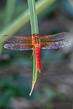 dragonfly_3591-46.jpg