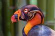 exotic-bird_3572-64.jpg