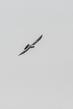 kite_3443-46(1).jpg