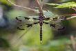 dragonfly_1171-64.jpg