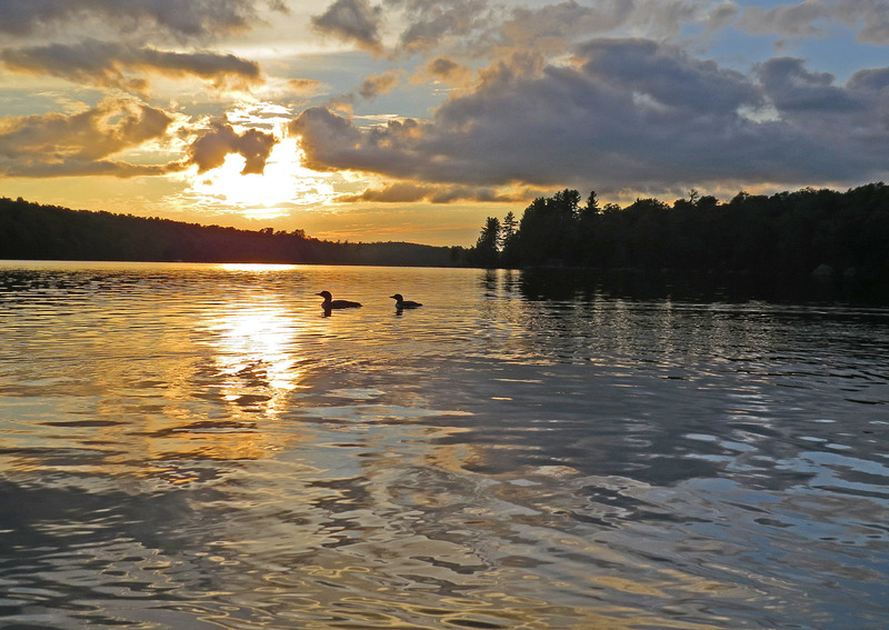 IMG_1849ar.jpg :: Two Loons at Sunset