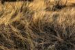 DesertTextures1.jpg
