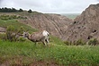 Badlands 2-021 Taken 6-10-09.jpg
