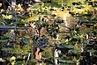 Ducks on Isa Lake in Yellowstone National Park Taken 9-12-07 solution.jpg