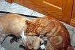 Losing to a Cat 001 Taken 9-17-08.jpg
