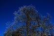 Ice Covered Trees In Clifton Park 065 Taken 3-8-11.jpg