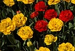 Washington Park Tulips 025 Taken 4-21-10.jpg