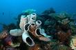 DSC_0132-Vase sponge  Coral.jpg