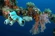 DSC_0167-SpongesSoft Coral on Railing.jpg