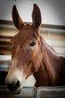 HorseCal-0890.jpg
