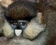 Monkey_6182.jpg