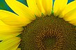 14 Sunflowers-6709.jpg