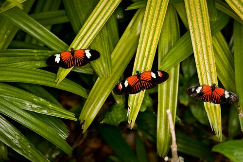 Butterfly World FL 2.jpg