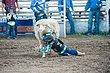 Rodeo-7015.jpg