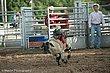 Rodeo-8304.jpg