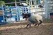 Rodeo-8306.jpg