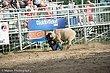 Rodeo-8308.jpg