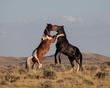 battling horses 0716_M3C6703 m.jpg