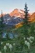 bear grass at sunrise 0712_M3C4978_HDR m.jpg