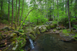 cascade with reflection 0416_M3C2928 m.jpg