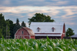 corn field and red barn 0616_M3C4613 m.jpg