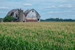 cornfield with double barns 0816_DSF2620 m.jpg