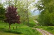 country road in spring 0610 0A1G5407 m.jpg