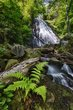 crabtree falls and fern 0512_M3C1709 m.jpg