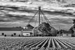 crop rows and farm buildings BW 0616_M3C4498 m.jpg