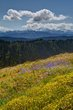 afternoon hurricaine ridge 0714_M3C2175_6_7_fused m.jpg